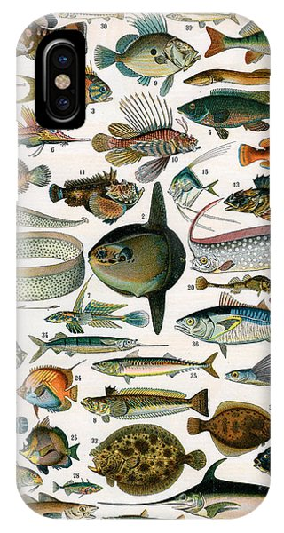 Ichthyology iPhone Case - Decorative Print Of Poissons By Demoulin by American School