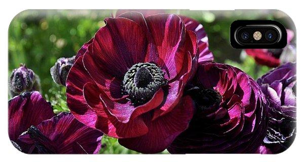 Deep Ranunculus IPhone Case