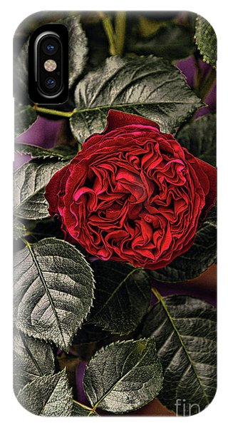Deep Red Rose IPhone Case