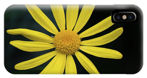 Deep Yellow Flower IPhone Case