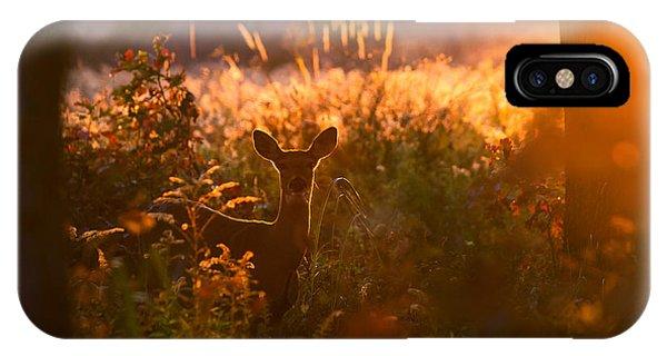 Deer At Ojibway Park IPhone Case
