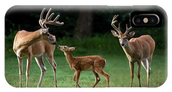 IPhone Case featuring the photograph Deer Family Portrait by Andrea Silies