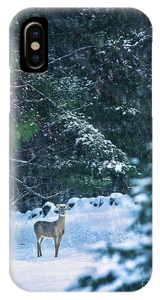 White Tailed Deer iPhone Case - Deer In A Snowy Glade by Diane Diederich