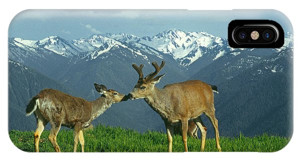 Ma-181-deer In Love  IPhone Case