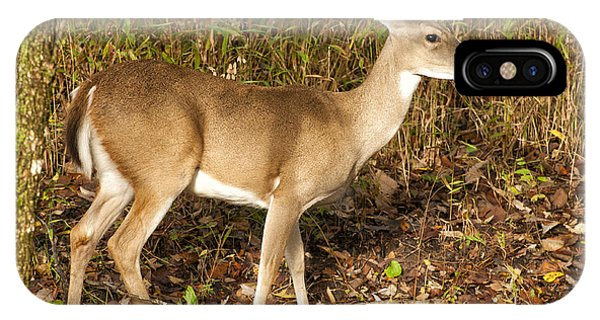 Deer In Morning Ligh IPhone Case