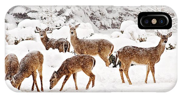 IPhone Case featuring the photograph Deer In The Snow 2 by Angel Cher
