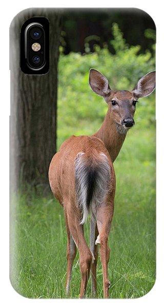 Deer Looking Back IPhone Case