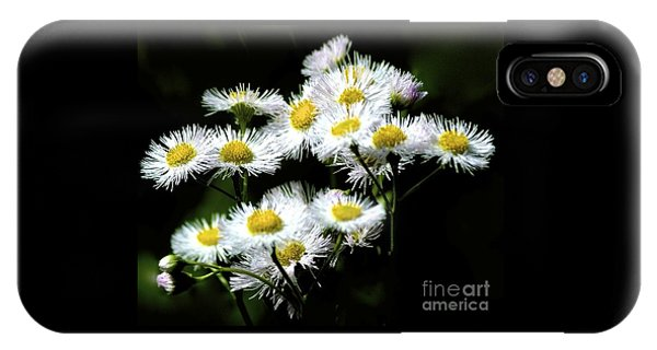 Delicate Daisies IPhone Case