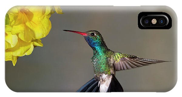 Humming Bird iPhone Case - Delicate by Janet Fikar