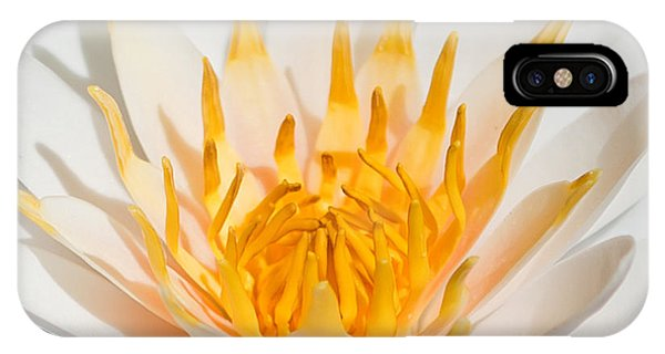 Lilly iPhone Case - Delicate Touch by Az Jackson