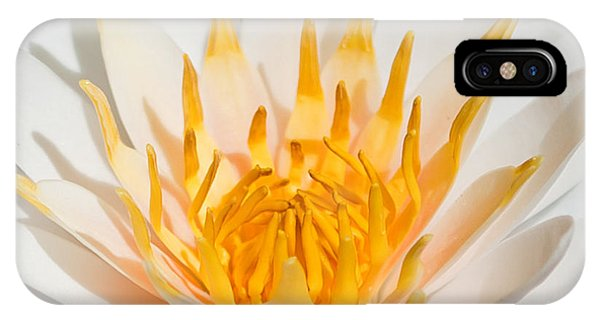 Under Water iPhone Case - Delicate Touch by Az Jackson