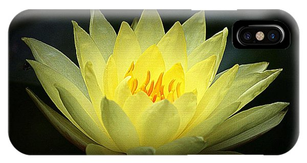 Delicate Water Lily IPhone Case