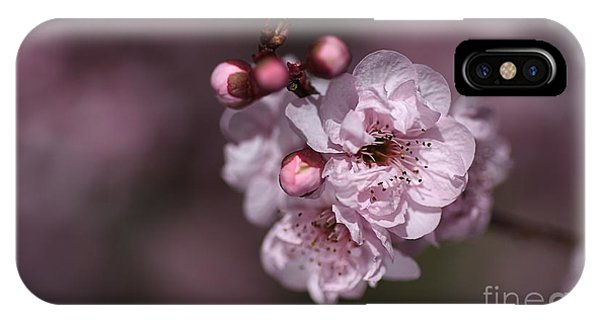 Delightful Pink Prunus Flowers IPhone Case