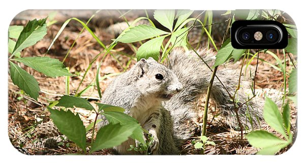 Delmarva Fox Squirrel - Local Rock Star IPhone Case