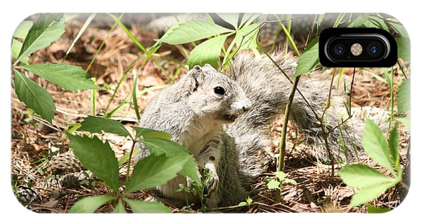 Delmarva Fox Squirrel - Local Rock Star IPhone Case