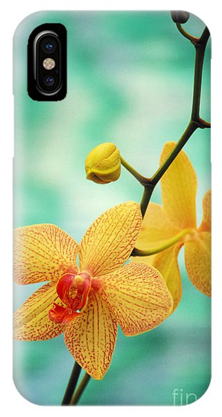 Orchid iPhone X Case - Dendrobium by Allan Seiden - Printscapes