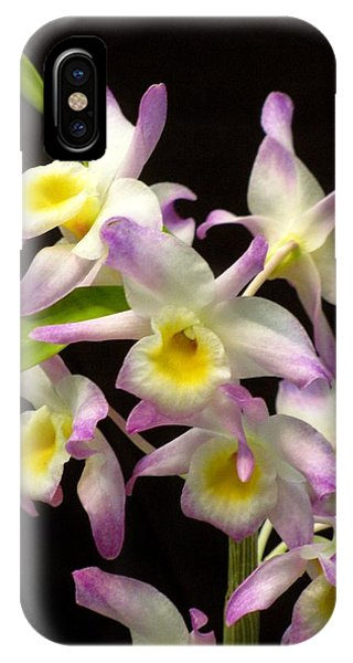 Dendrobium Orchid IPhone Case