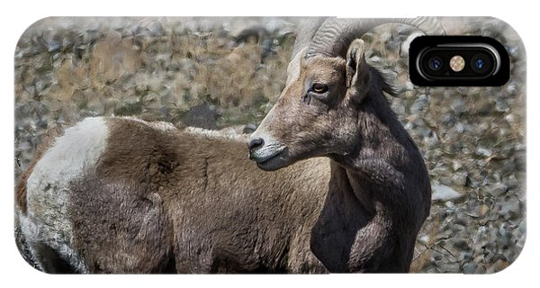 Desert Big Horn Sheep Phone Case by Webb Canepa