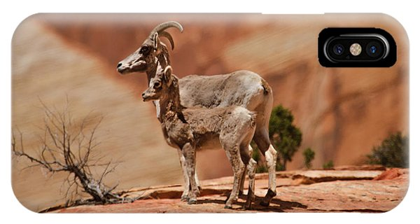 Rocky Mountain Bighorn Sheep iPhone Case - Desert Bighorn Sheep by Robert Bales