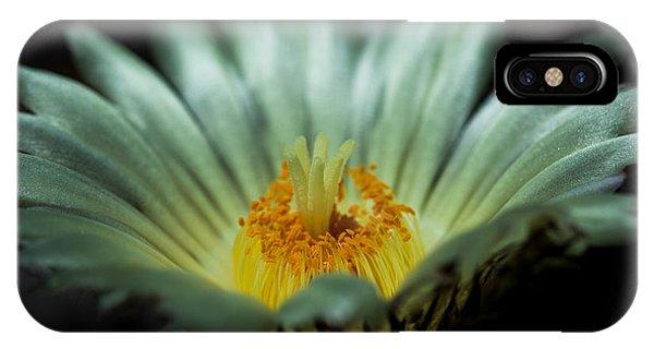 Desert Flower IPhone Case