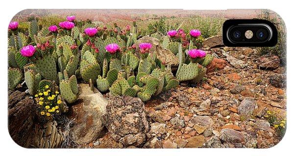 Desert Cactus In Bloom IPhone Case