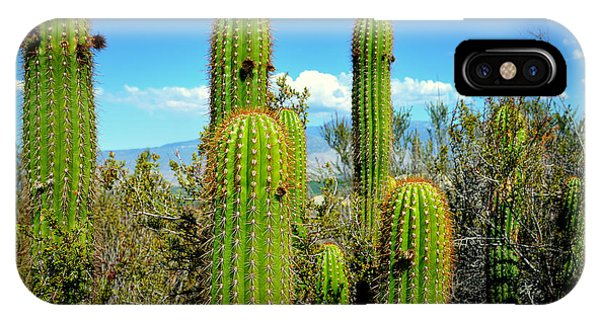 All In The Family iPhone Case - Desert Plants - All In The Family by Glenn McCarthy