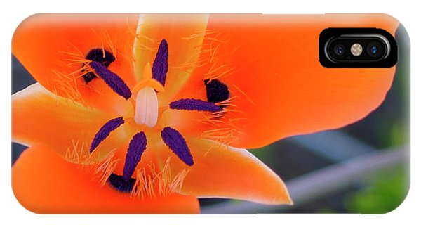 IPhone Case featuring the photograph Desert Wildflower by Penny Lisowski