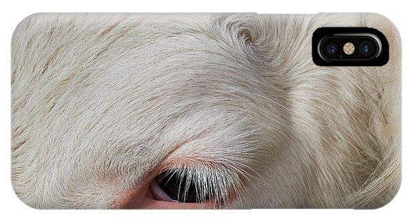 IPhone Case featuring the photograph Detail Of The Head Of A Cow by Nick Biemans