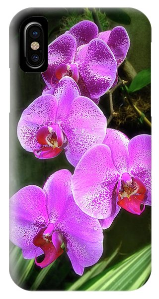 Dew-kissed Moth Orchids IPhone Case