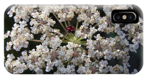 Dew On Queen Annes Lace IPhone Case