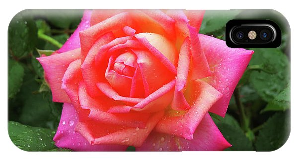 Dewy Rose IPhone Case