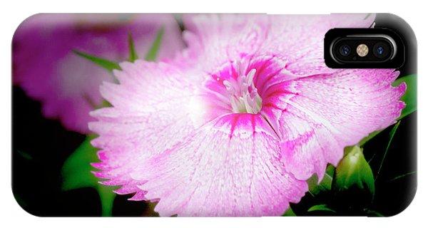 Dianthus Flower IPhone Case