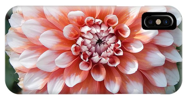 Dahlia Flower- Soft Pink Tones IPhone Case