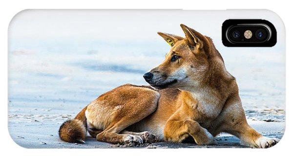 Dingo On Fraser Island Beach IPhone Case
