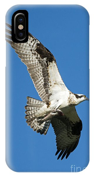 Ospreys iPhone Case - Dinner To Go by Mike Dawson