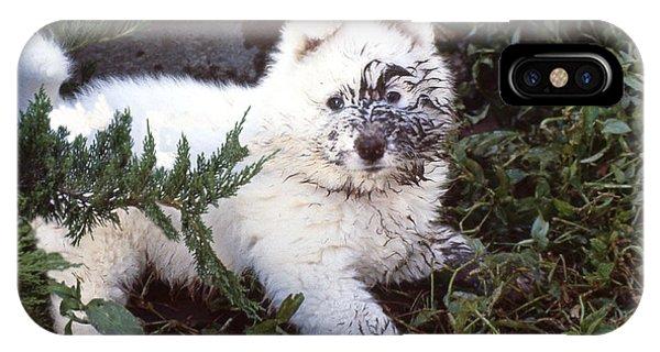 Dirty Dog Birthday Card IPhone Case