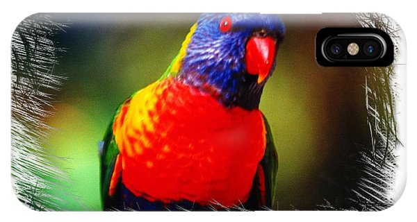 Do-00153 Colourful Lorikeet IPhone Case