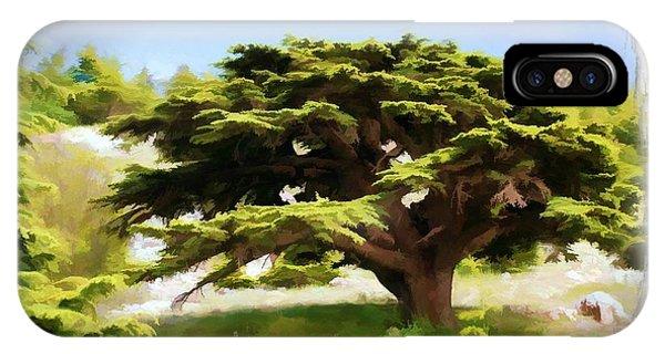 Do-00319 Cedar Tree IPhone Case