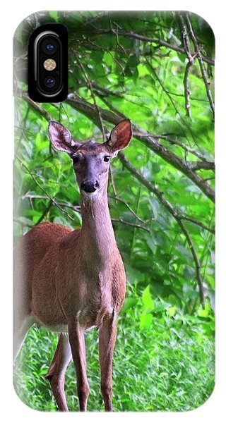 Doe And Cardinal IPhone Case