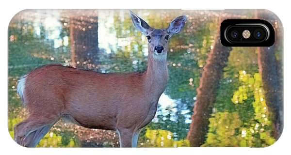 White Tailed Deer iPhone Case - Doe Surprise by Donna Kennedy