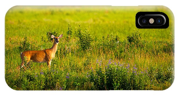 Whitetail Doe In Prairie Clover IPhone Case