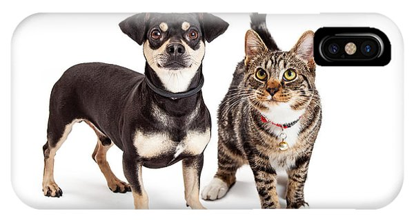 Dog And Cat Standing Looking Up Together IPhone Case