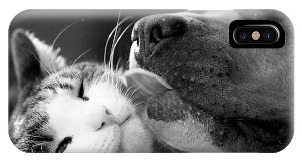 Dog And Cat  IPhone Case