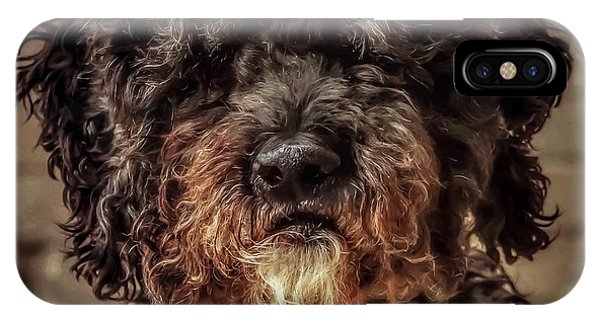 IPhone Case featuring the photograph Dog  by Cliff Norton