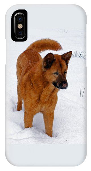 Dog Days Of Winter IPhone Case