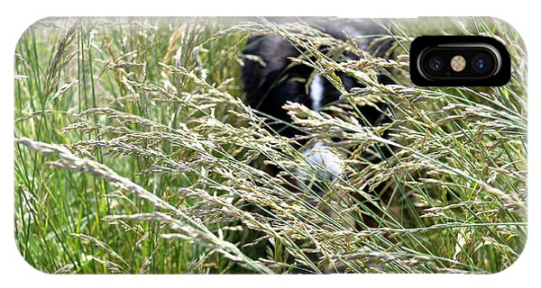 Bernese Mountain Dog iPhone Case - Dog Hiding In The Grass by Pelo Blanco Photo