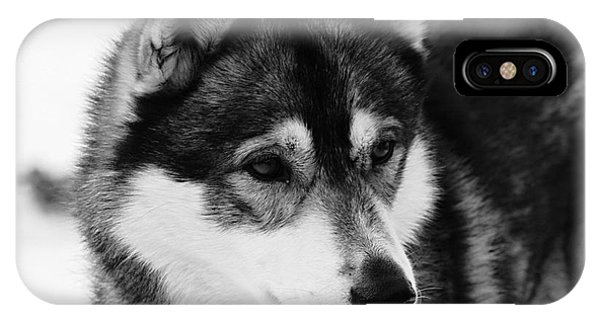 Dog - Monochrome 3 IPhone Case