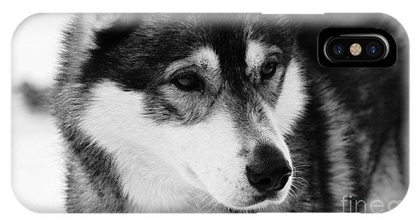 Dog - Monochrome 3 IPhone Case