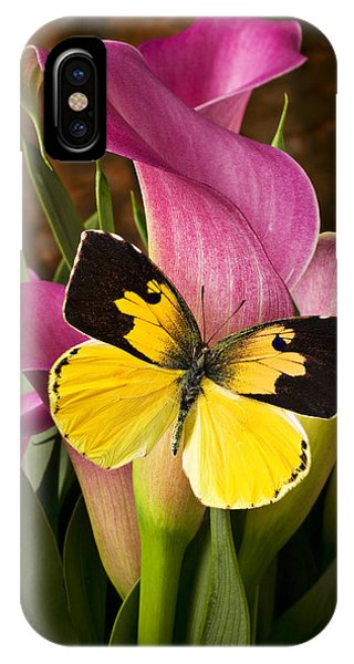 Dogface Butterfly On Pink Calla Lily  IPhone Case