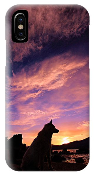 IPhone Case featuring the photograph Dogs Dream Too  by Sean Sarsfield